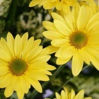 Yellow Color Flowers