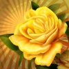 Download yellow rose, yellow rose  Wallpaper download for Desktop, PC, Laptop. yellow rose HD Wallpapers, High Definition Quality Wallpapers of yellow rose.