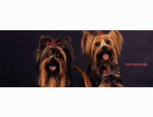 Yorkshire Terriers Cover