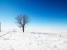 alone in snow wallpapers