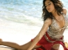 amrita rao wallpaper download