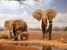 are we there yet elephants wallpapers