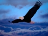 blad eagle freedom wings hd wallpapers