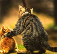 cat arms around friendship wallpapers