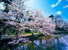 cherry blossom trees wallpapers