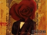 devotchka rosehead wallpaper