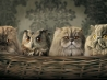 funny animals hd wallpapers new 8