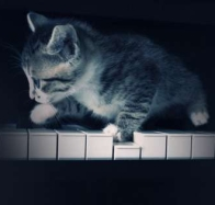 kitten playing piano cover