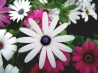 Lovely Colorful Flowers Hd Wallpaper
