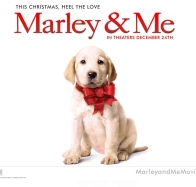 marley amp me dog wallpapers
