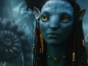 neytiri female in avatar wallpapers