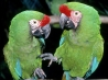 parrot 0 hd wallpapers