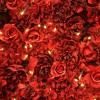 Download red roses lights, red roses lights  Wallpaper download for Desktop, PC, Laptop. red roses lights HD Wallpapers, High Definition Quality Wallpapers of red roses lights.