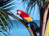 scarlet macaw hd wallpapers