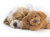 snoozing with snuggles wallpapers