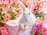 springtime hare wallpapers